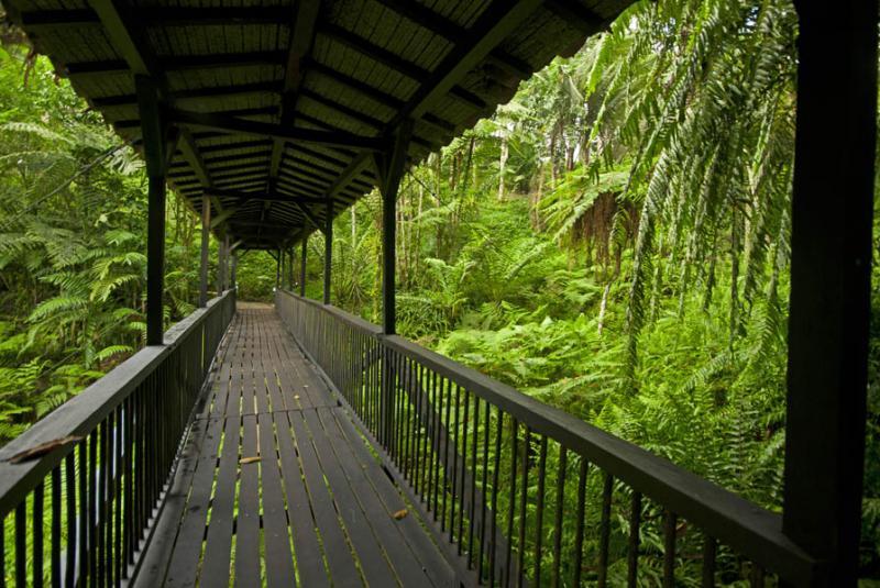 Jardin Botanico del Quindio, Calarca, Quindio, Arm...