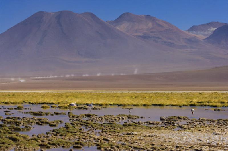 Vegas de Putana, San Pedro de Atacama, Antofagasta...