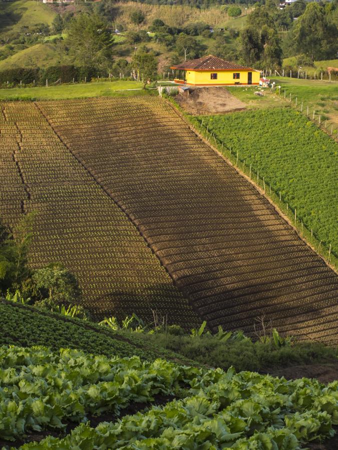 Cultivos en Marinilla, Oriente Antioqueño, Antioq...